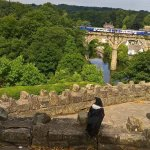 Royal Raven watching a train pass by on the viaduct.