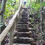 Foto de Rainforest Hideaway