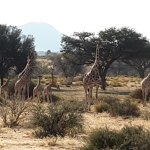 Lovely family of Giraffe on the game drive