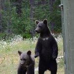 Valokuva: Martinselkonen Wilds Centre