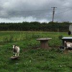 Crapnell Farmhouse Bed & Breakfast Foto