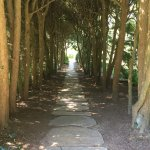 A walkway in the gardens