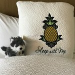 Staying at Pineapple you will always have a companion.