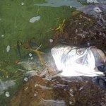 My fish!