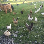 Just a few of the livestock on the Farm!