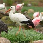 Birds on Safari