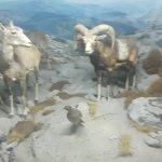 Photo of Civico Museo di Storia Naturale