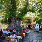 Outdoor dining under a magnificent plane tree.