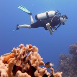 Diving with Aldora