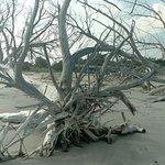 Impressive sculptural driftwood formations
