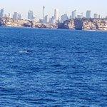 Whale slightly left of centre Sydney skline background