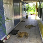 The hallway outside of our rooms, with sleepy dogs.