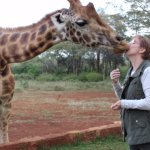 Giraffe kisses at the afternoon tea!