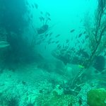 Haad Yao Divers Foto