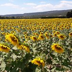 Photo of Tours in Provence - Day Tours