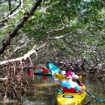 Enjoy the shade of the mangrove tunnels.