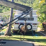 Photo of BIG4 Capricorn Palms Holiday Village