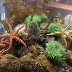 Foto de Ucluelet Aquarium