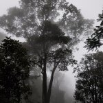 The Tall Trees Munnar Photo
