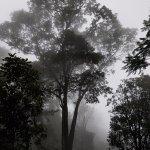 The Tall Trees Munnar Εικόνα