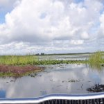 Photo de Spirit of the Swamp Airboat Rides