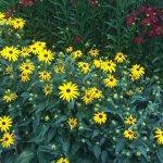 Photo of Botanical Gardens (Botaniska Tradgarden)