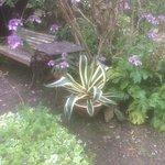 Collection of photos throughout the garden