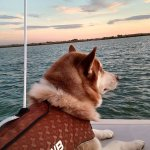 Boat and pet friendly