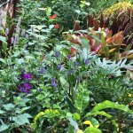 Foto de Butterfly Rainforest