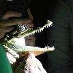 aligator catching in nocturne trip