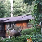 Yesterday August 1, 2017 we were in the yard and this huge Elk decided to check out the Koi pond