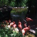 My favourite flamingos!