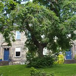 The 200 year old Ash Tree in front of the Inn! I love this tree!