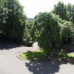 The Ash Tree from our room!