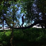 For de unge eventyrlystne er der massevis af træer der egner sig til klatring...