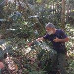 Foto de Tropical Tree Climbing