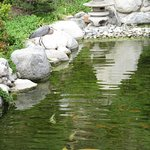 Great Blue Heron & Koi Pond - Japanese Friendship Garden