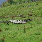 Killary Sheep Farm