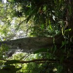 Foto de Parque Gallineral