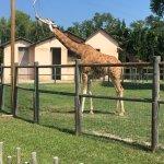 Parco Zoo Punta Verde Foto