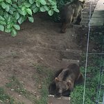 Bärenpark Foto