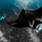 Magestic Manta Rays on the back of the reef. Truly mesmerising to watch..