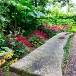 Beautiful slab of wood made into a bench in the Woodland Garden