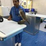 Photo of Abu Dhabi Falcon Hospital