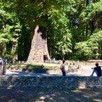 Chandelier Drive-Through Tree 44