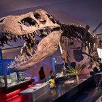 T. rex cast (original in the Museum of the Rockies)