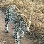 World class lodge and top draw sightings