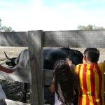 Petite caresse sur une vache