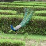 visitor in hotel garden.