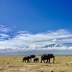 Home to Kenya's largest elephant hers!